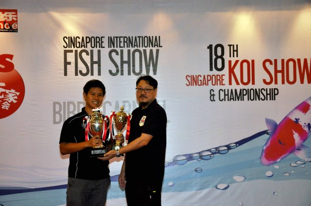 18th Singapore Koi Show & Championship 2014 Award Presentation Mini Champion Kinginrin Shiro Utsuri  Owned by Lester Pang Bred by Marugen Koi Farm, Singapore