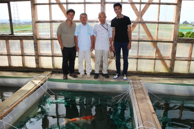 Hoshino Brothers @ Maruboshi Koi Farm
