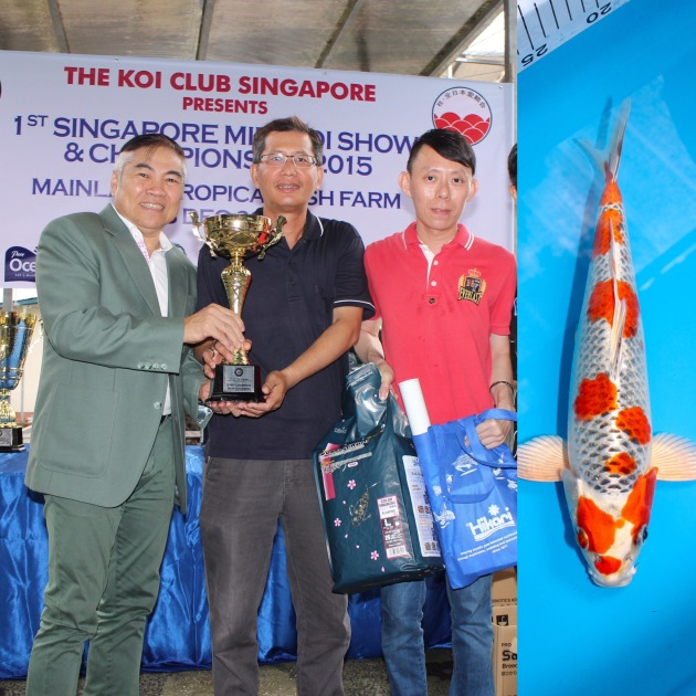 "1st Singapore Mini Koi Show & Championship 2015 Baby Champion Non-Gosanke Best-In-Size (25Bu) 1st Prize Hikari Moyomono (25Bu) Offspring of ""J Blessing"" Bred by Marugen Koi Farm, Singapore Owned by Steven Tan"