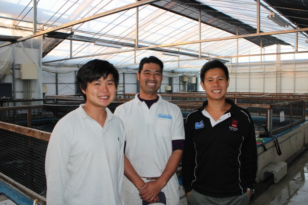 Omosako san @ Omosako Koi Farm